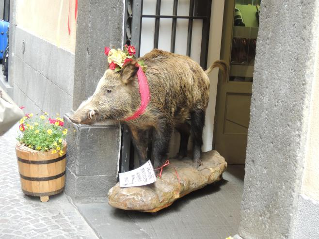 Cinghiale (Wild Boar)