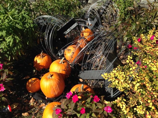 Still More Pumpkins