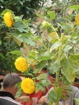 Flowers of Pienza