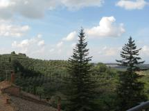 Montisi Landscape