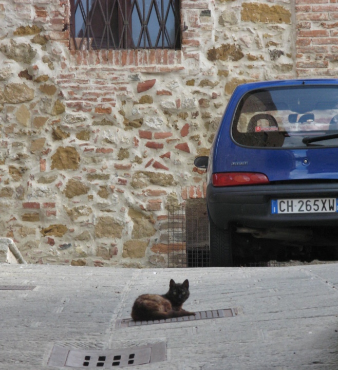 The Only Cat in Town!