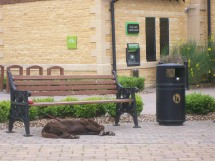 A Tired Puppy in Broadway, UK