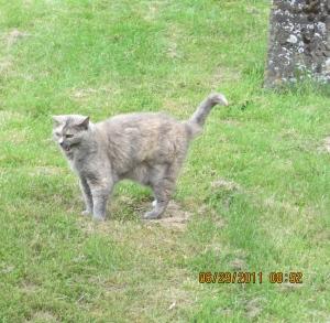The Church Cat at St Eadburgha's