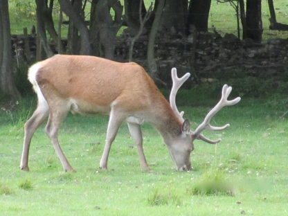 Deer at the Broadway Tower