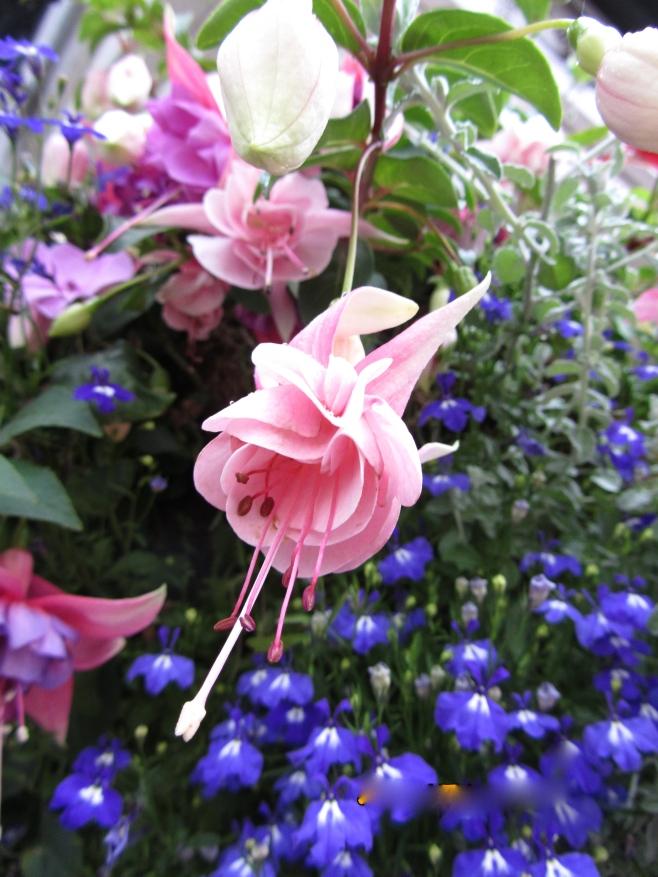 Beautiful flowers of Broadway, UK