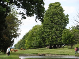 The Cows at Stanway House