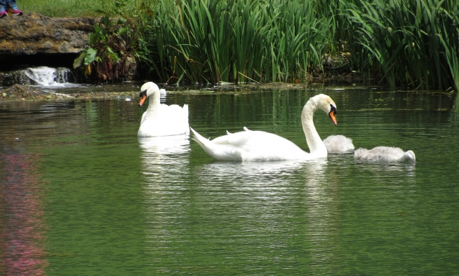 The Swans at Stanway House