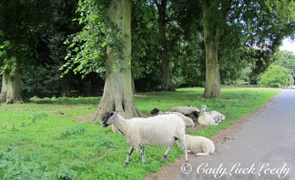 Sheep at Kinlet Hall, Kinlet, UK