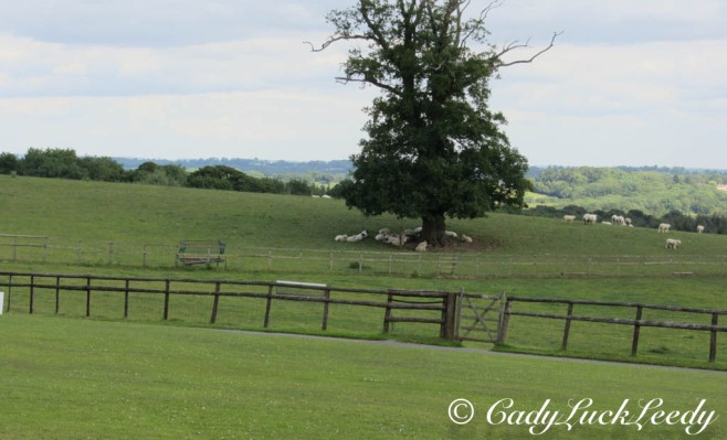 The Sheep of Kinlet Hall, Kinlet, UK