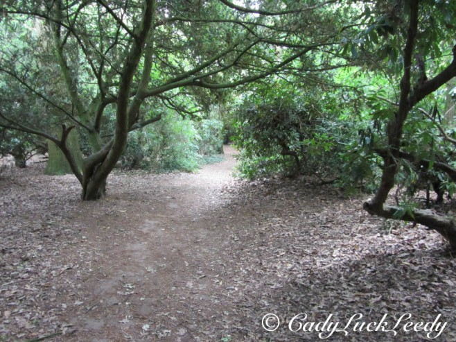 The Spooky Path Through the Woods at Acton Burnell Castle, Acton Burnell, England