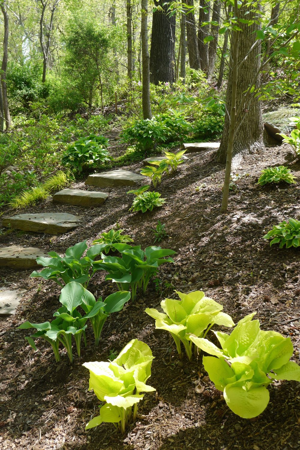 My Woodland Garden Path, April 2014