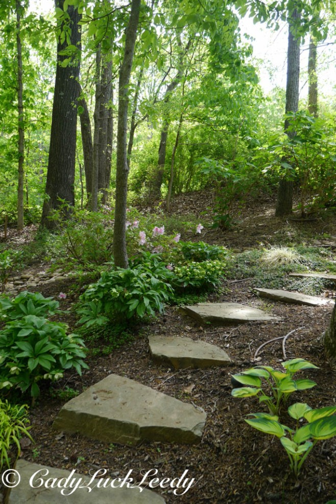 Woodland Garden, April 2014
