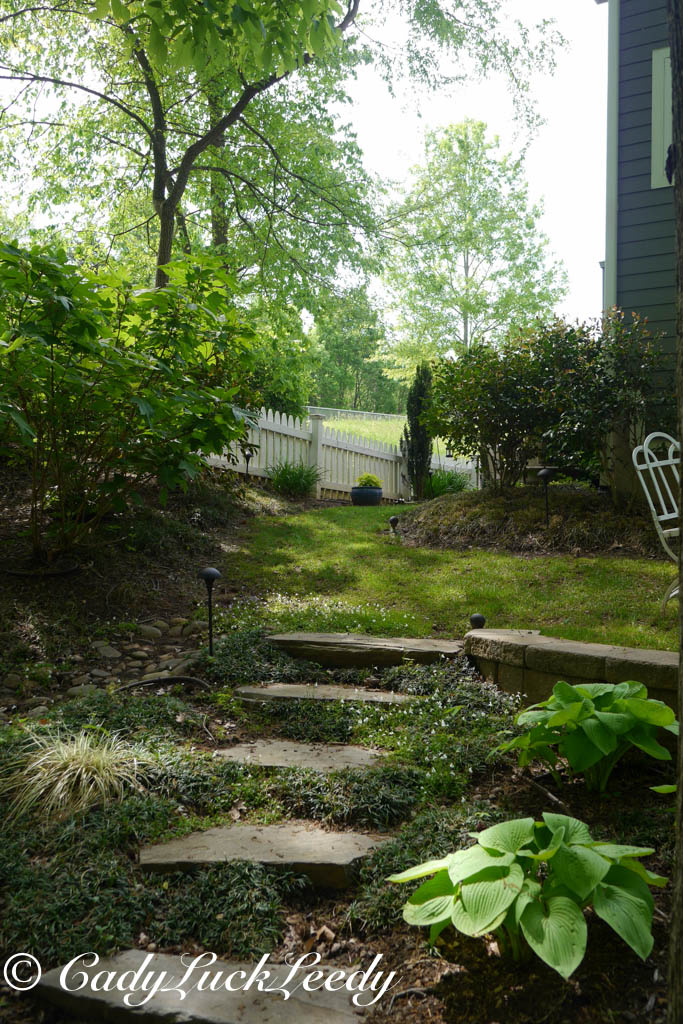 Woodland Garden Towards Cottage
