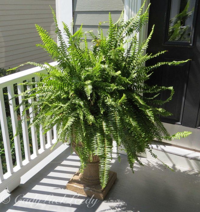 Fern on the Porch!