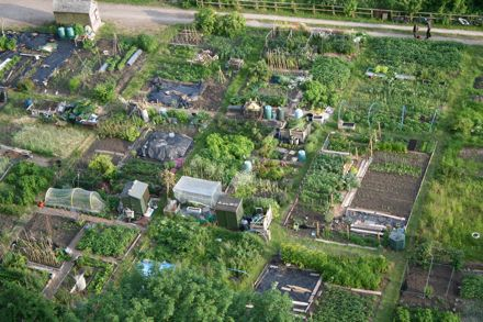 """Allotments in Bath, England."