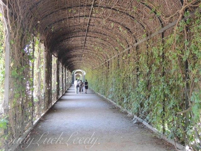 The Vine Enclosed Walkway Around the Orangery, Schönbrunn Palace