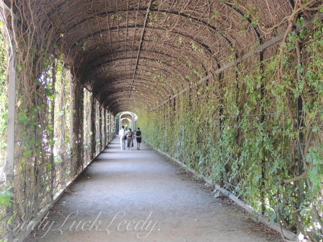 The Vine Enclosed Walkway Around the Orangery, Schönbrunn Palace