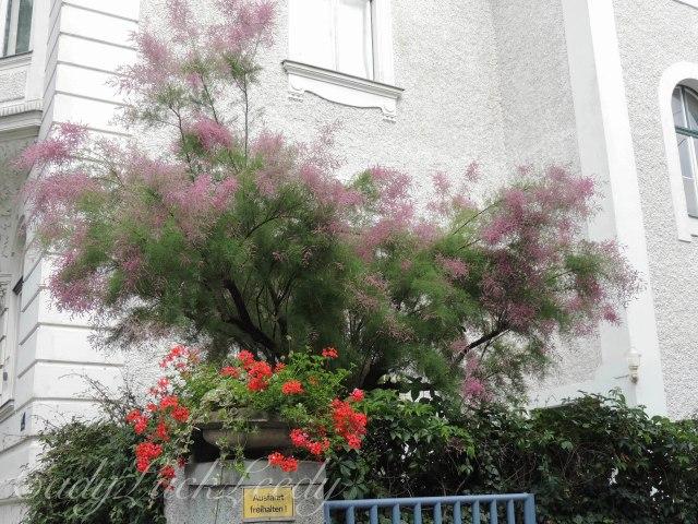 We Call This a Smoke Tree
