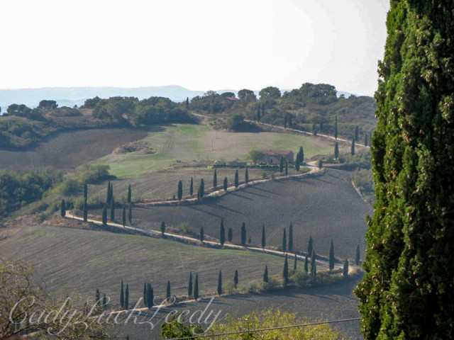 The Road to La Foce, Italy