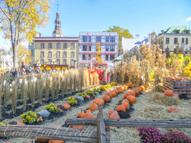 Rows and Rows of Pumpkins! Quebec City, Canada