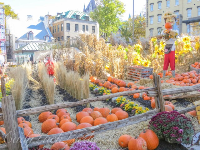 Carefully Planned Fields of Pumpkins, Wheat, and Mums, Quebec City, Canada