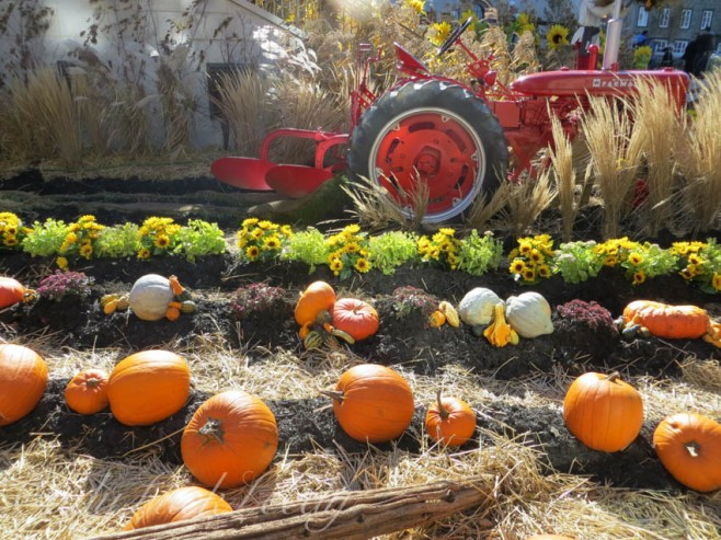 A Vintage Tractor in the Fields of Pumpkins, Quebec City, Canada