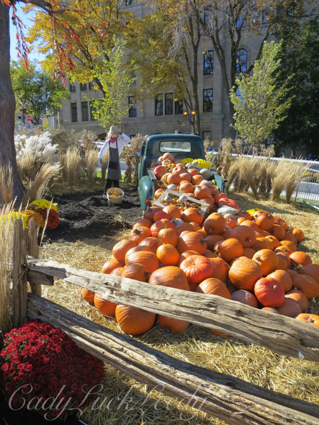 Stacks of Pumpkins, Quebec City, Canada