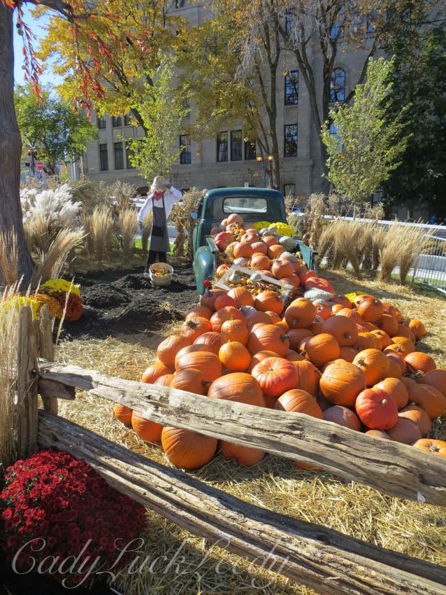Stacks of Pumpkins, Quebec City, Canada