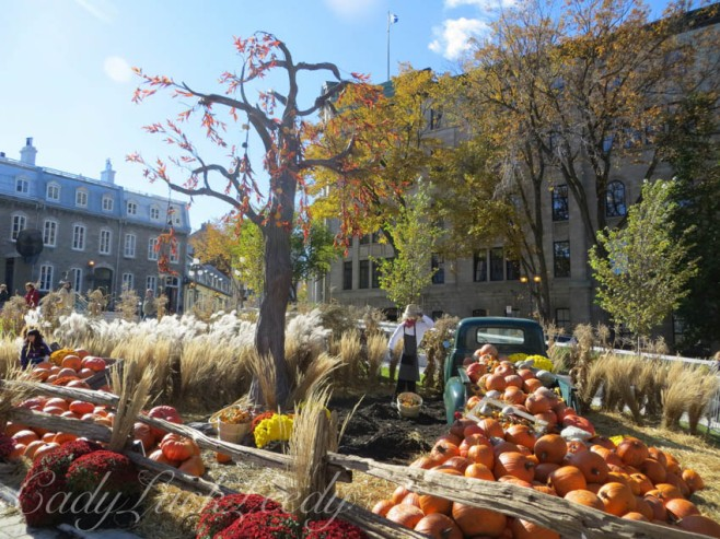 Gotta Have the Spooky Tree! Quebec City, Canada