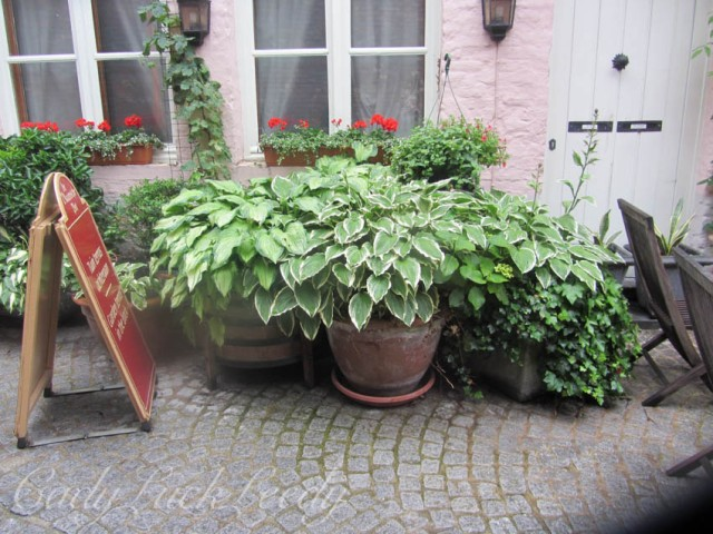 Beautiful Pots of Hostas Along the Way!