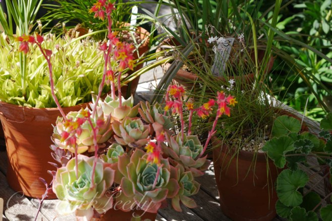 The Succulents at Whites Cottage, Fletching, Uckfield