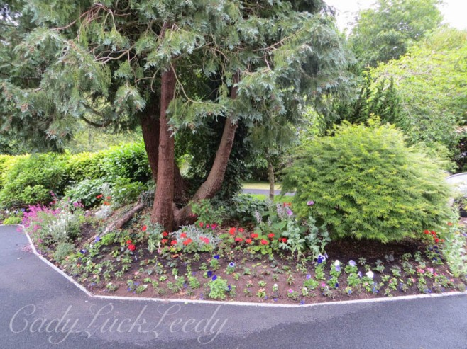 A Grouping of Flowers in the Driveway Arrangement, Wealden House, Sussex