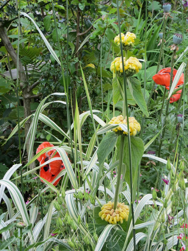 Jerusalem Sage with Poppies, 1Herrings Cottage, Warninglid