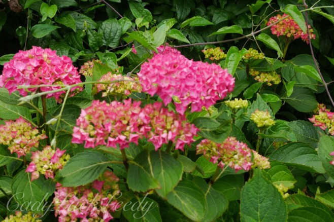 The Flowers of Wealden House, Warninglid, Sussex
