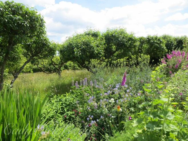 Looking at the Orchard at Luctons, Sussex
