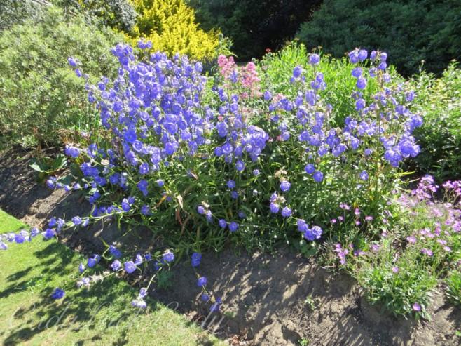 Garden at Knole, Sevenoaks, Kent, UK