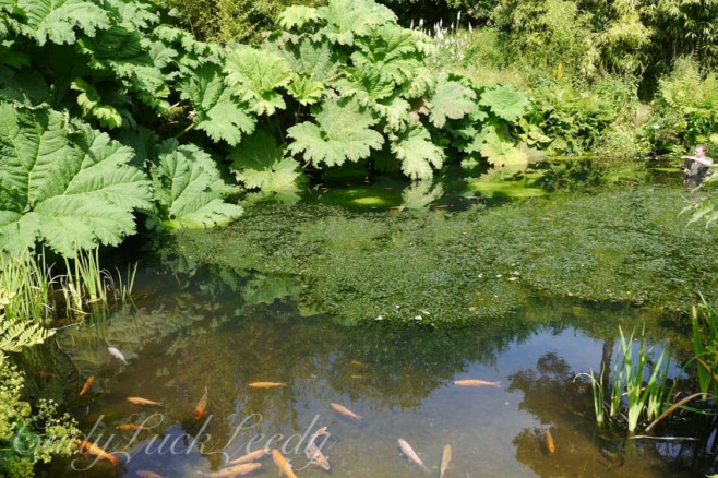 The Fish Pond, Chartwell, Kent, UK