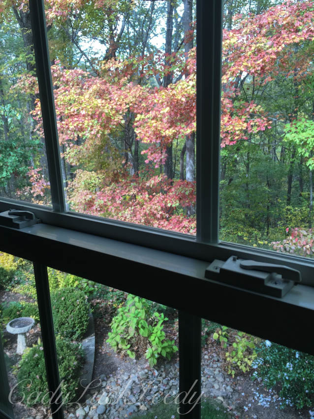 Fall From My Window