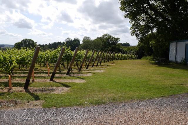 Chapel Down Winery, Tenterden, Kent, UK