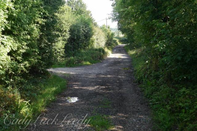 The Lane to the Bullein B&B, Tenterden, Kent, UK