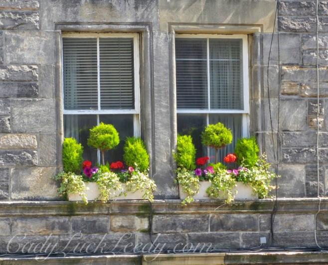 Electric Lime Window Box Display in Edinburgh, Scotland
