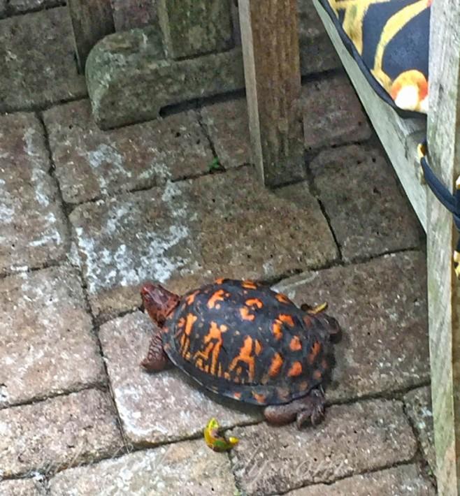 My Turtle