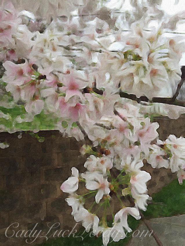 The Cherry Blossom Tree Painted in Brushstroke App