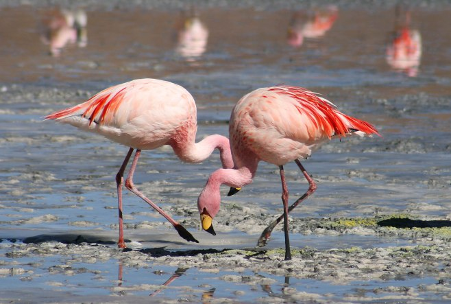 The James Flamingo