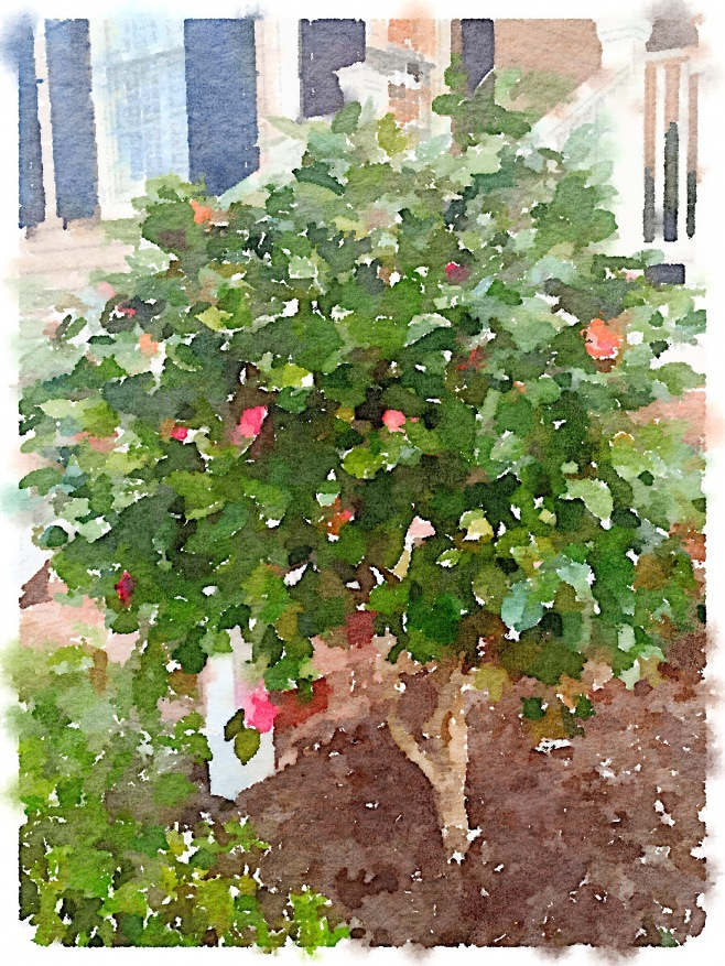 Painted in Waterlogue App