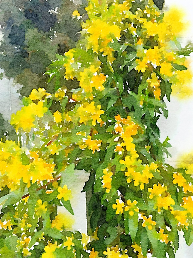 Yellow Jasmine Painted in Waterlogue App