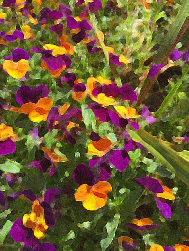 A Splash of Violas in Brushstroke App