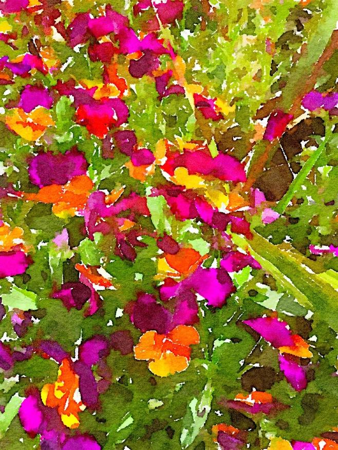 A Splash of Violas in Waterlogue App