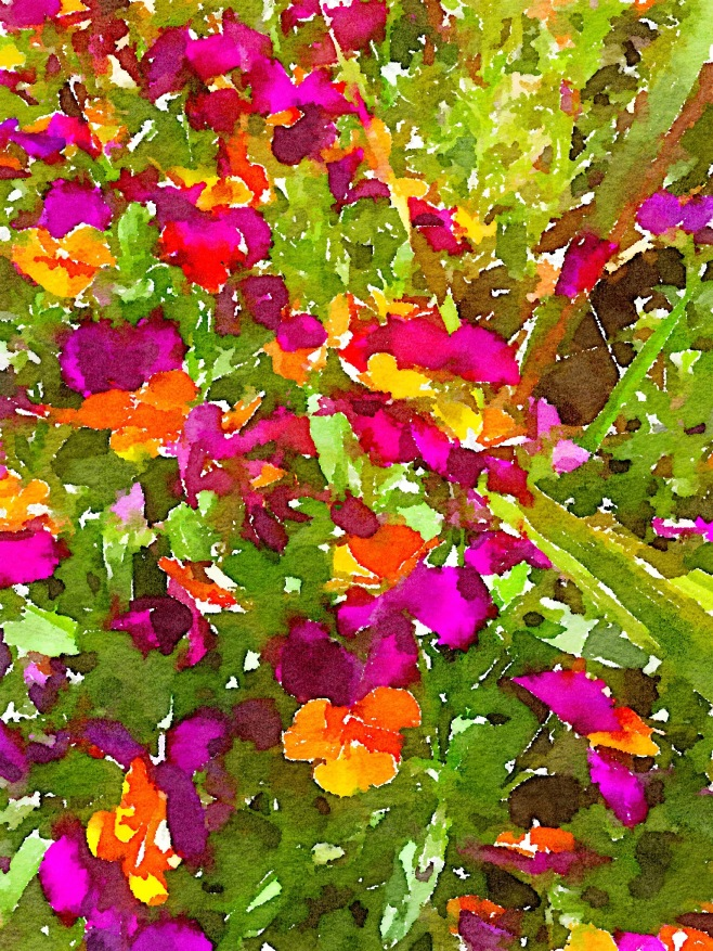A Splash of Violas in Waterlogue App