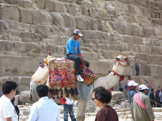 Camel by Pyramid of Chephren. Cairo, Egypt